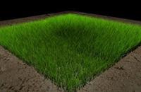 Трава в Cinema 4D